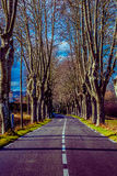Rural road with high trees on both sides. This is a series of photos with a road in Provence, France guarded by high trees on both sides Stock Photo