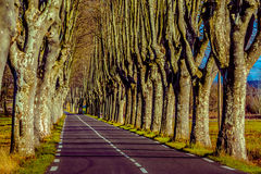 Rural road with high trees on both sides. This is a series of photos with a road in Provence, France guarded by high trees on both sides Royalty Free Stock Images