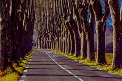 Rural road with high trees on both sides Royalty Free Stock Image