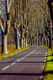 Rural road with high trees on both sides. This is a series of photos with a road in Provence, France guarded by high trees on both sides Royalty Free Stock Photo