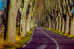 Rural road with high trees on both sides. This is a series of photos with a road in Provence, France guarded by high trees on both sides Royalty Free Stock Photography