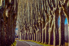 Rural road with high trees on both sides Stock Images