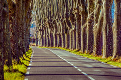 Rural road with high trees on both sides Royalty Free Stock Photos