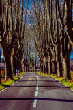 Rural road with high trees on both sides. This is a series of photos with a road in Provence, France guarded by high trees on both sides Royalty Free Stock Photos