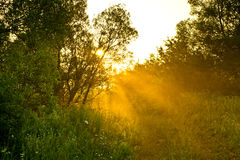 Rural Road In The Morning Royalty Free Stock Photography