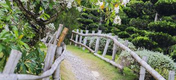 Rural road in Japanese garden with beautiful trees of green tones. And fenced with bamboo royalty free stock photography