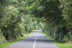 Rural Road, Killarney. Rural Road in Killarney; County Kerry; Ireland Royalty Free Stock Photos