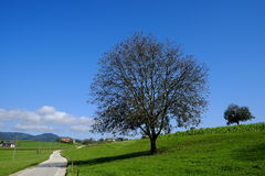 Rural road. Rural landsacpe near Skofja Loka, Slovenia Royalty Free Stock Photos