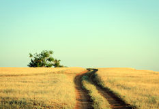 Rural road leading to a lonely oak tree Stock Photography
