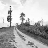 Rural road leading to the tree Royalty Free Stock Image
