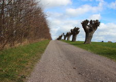 Rural Road with Line of Old Willow Trees Stock Photo
