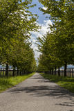 Rural road lined with leafy green trees Royalty Free Stock Image