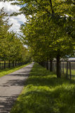 Rural road lined with leafy green trees Royalty Free Stock Photo