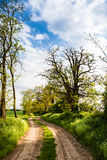 Rural road lined by trees Stock Image