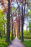 Rural road lined by trees Royalty Free Stock Photography