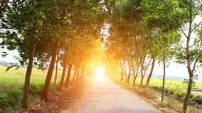 Rural road with many trees Royalty Free Stock Photo