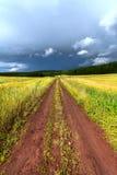 Rural road, meadow Stock Photos