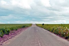 Rural road in the middle of green grain fields royalty free stock photo