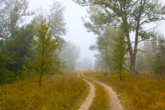 Rural road in misty forest Stock Images
