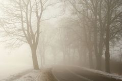 Rural road in morning fog in autumn Stock Images