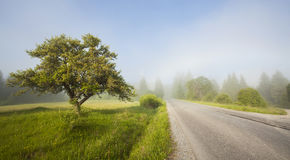 Rural road in morning fog Royalty Free Stock Photography