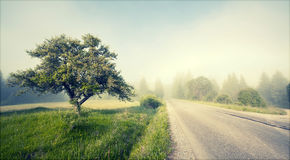 Rural road in morning fog Stock Photography