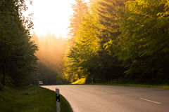 Rural Road in Morning Mist Stock Photos