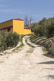 Rural road. In the mountains with olive farms Stock Images