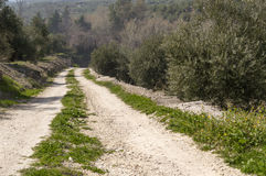 Rural road. In the mountains with olive farms Stock Photo