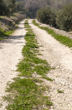 Rural road. In the mountains with olive farms Stock Photography