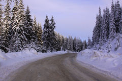 Rural road in the mountains in winter. Surrounded by pine trees Royalty Free Stock Image