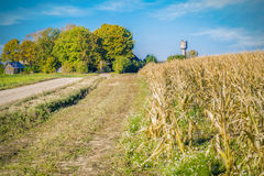 Rural road near cold corn field Royalty Free Stock Photo