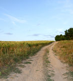 Rural road near a field with sunflowers. Landscape. Royalty Free Stock Photos