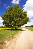 The rural road Stock Photography