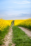 Rural road through oilseed rape field Stock Images