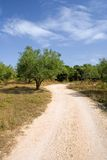 Rural road and olive tree Royalty Free Stock Image