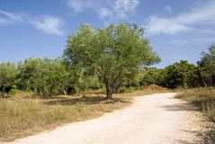 Rural road and olive tree Stock Photos