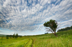 Rural road over fields Royalty Free Stock Images