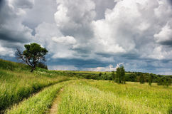 Rural road over fields Stock Photography