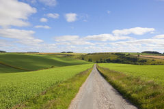 Rural road and pea crops Stock Photo