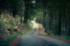 Rural road in a pine forest in autumn. Ghostly atmosphere Royalty Free Stock Image
