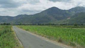 Rural road between planted fields. Rural road through planted fields stock video footage