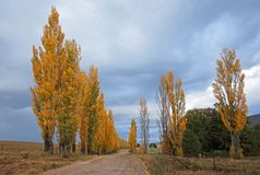 Rural road and poplar trees Royalty Free Stock Photography