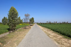 Rural road in rajasthan. A small rural road in rajasthan india with trees wheat and mustard crops with young orchards under a clear blue sky Royalty Free Stock Photos