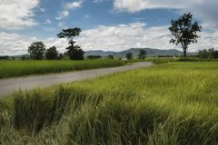 Rural road with rice paddies in Phayao, Thailand. With backdrop as mountains Stock Images
