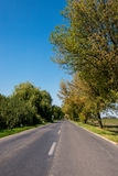 Rural road between row of trees late summer Stock Photography