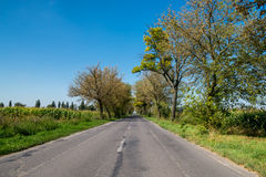 Rural road between row of trees late summer Stock Image