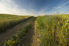 Rural road running through the fields. Summer,Germany Royalty Free Stock Photos