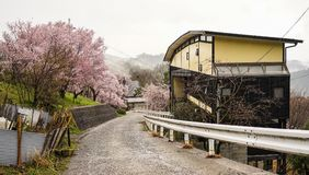 Rural road with small house in spring. Rural road with small house at cherry blossom in spring time Royalty Free Stock Images