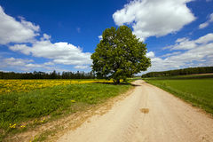 The rural road Royalty Free Stock Photos